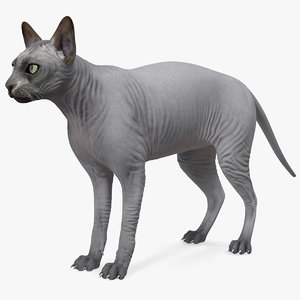 sphynx cat solid color 3D model