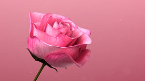 rose blooming animation 3D