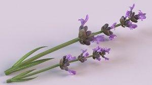 3D lavender flowers spices model