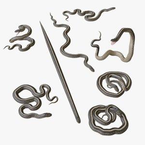 3D garter snake animation