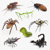 Rigged Creeping Insects Collection 2