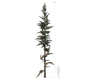 3D conifer tree 003 model