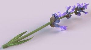 lavender flowers spices blue 3D model