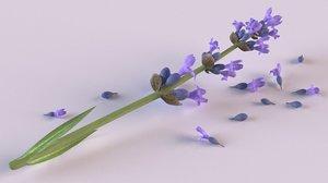 3D lavender flowers spices