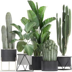 3D plants flowerpots cactus
