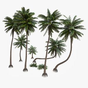 3D palm v-ray coconut