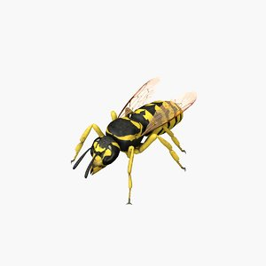 wasp insect animal model