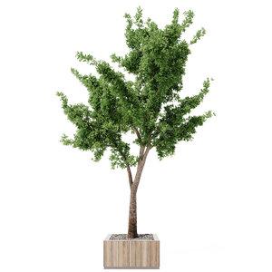 3D tree outdoor plants