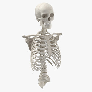 3D real human rib cage model