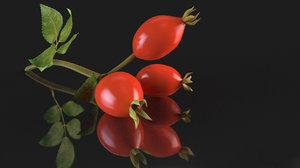 rosehips berry rose hip 3D model