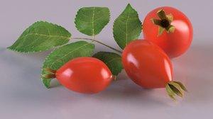 rosehips berry fruit photorealistic food 3D model