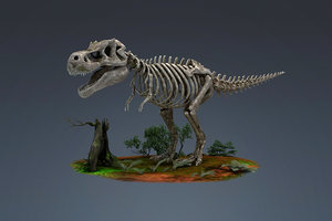 fossils dinosaurs tyrannosaurs skeletons 3D