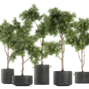 3D model decorative tree black flowerpot