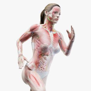 3D female anatomy blender rigged model