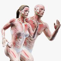 Full Male And Female Anatomy Set (Blender Rigged)
