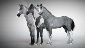 3D rigged stallion horse model