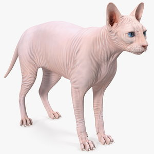 3D cream white sphynx cat