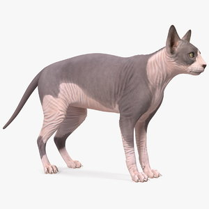 sphynx cat heterochromia 3D model