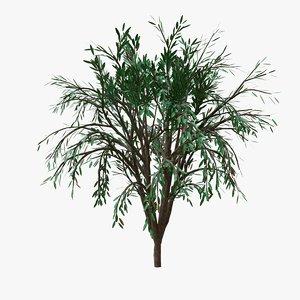 tree modeled 3D