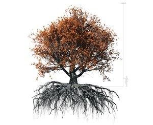 3D beech tree 002 - model