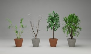 3D model large potted plants