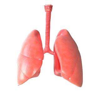 3D human lungs model