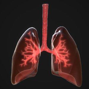 human lungs 3D model