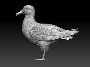 seagull sea gull 3D