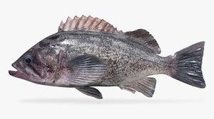 3D model deacon rockfish