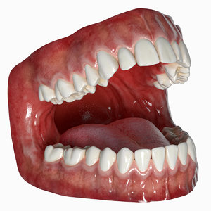3D human mouth tongue