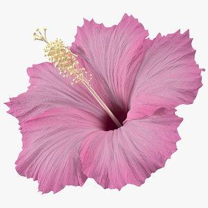 hibiscus flower pink 3D model