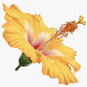 blooming hibiscus flower orange model