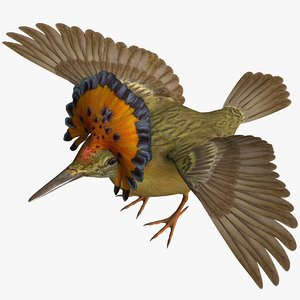 royal flycatcher 3D model