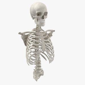 real human rib cage 3D model