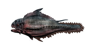 piranha fish model