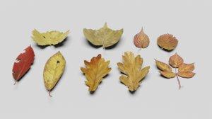 ground leaves pack dead 3D model