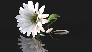 chamomile daisy flower nature 3D model