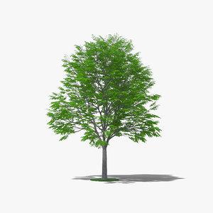3D coffee tree