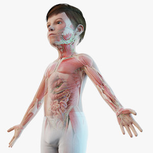 3D model kid boy anatomy