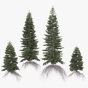 3D model spruce conifer coniferous