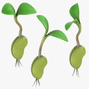 growing seed set 3D model