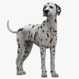 dog dalmatian rigged animation 3D model
