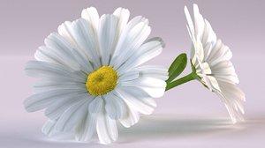 3D daisy chamomile flower nature model