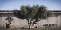 Olive Tree 1 RETOPO