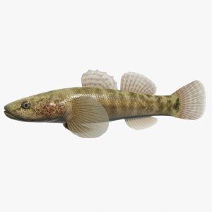 3d model gymnogobius petschiliensis swimming