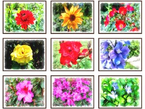 pictures flowers 3D