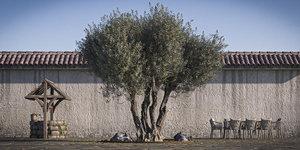 2 retopo tree model