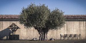 3D trunk retopo 5 tree