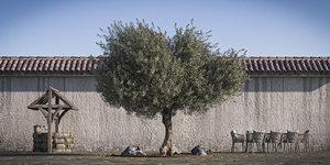 trunk retopo tree 3D