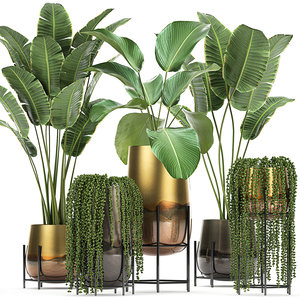 3D model plant houseplants